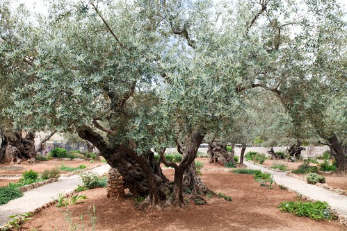 Passing through Gethsemane
